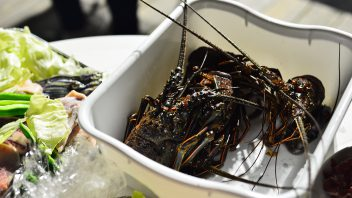 Affordable seasonal Japanese spiny lobster!